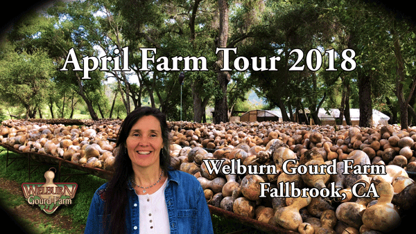 43: Tour the Gourd Racks and See the 2018 Crop with Phoebe Welburn